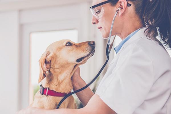 [image]Veterinary Diagnostics
