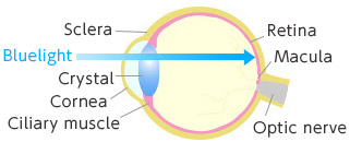 [image] Bluelight entering through the eye and reaching Macula part of eye
