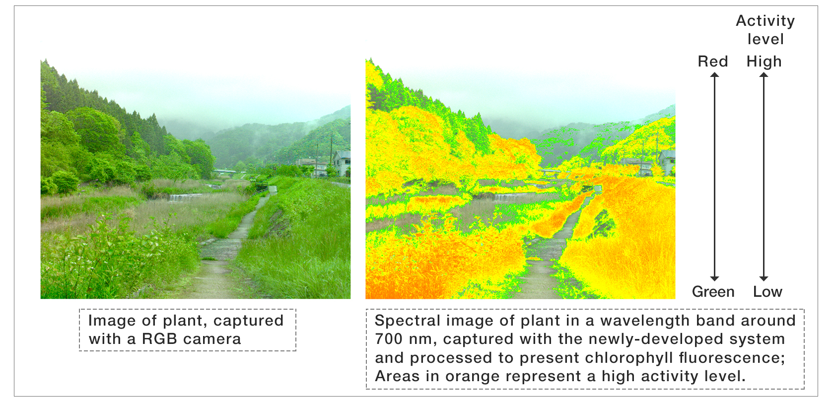 ①observation of plant growth