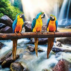 Image semi-brillante de perroquets