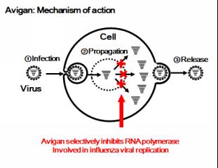 Illustration of Avigan Mechanism of Action