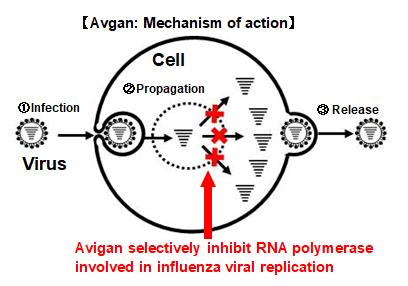 Illustration du mécanisme d'action de l'Avigan