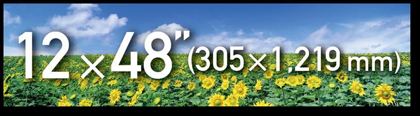 """[imagen] Campo de girasoles y fotografía del cielo azul con superposición de texto para papel de 2 × 48"""" (305 × 1219mm)"""