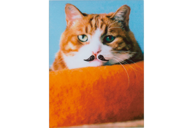 Mustache filter picture of a cat on the orange pillow