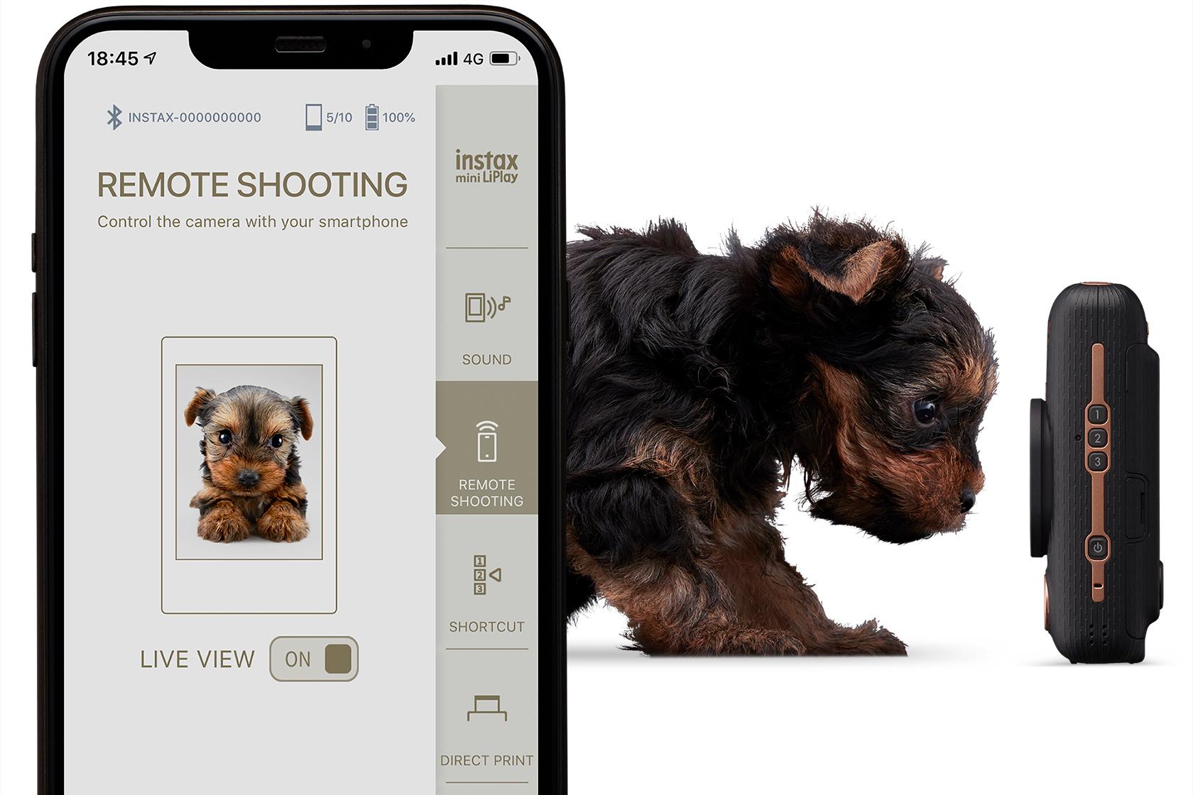 Collage de un teléfono con la imagen del perro saliendo del teléfono y mirando hacia la cámara LiPlay