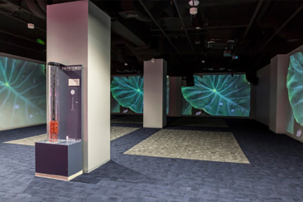 [photo] Tokyo Tower Welcome Lounge room with FP-Z5000 systems projecting leaf images unto walls