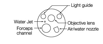 [image] Tip of endoscope with parts - light guide, forceps channel, objective lens, air/water nozzle, and water jet