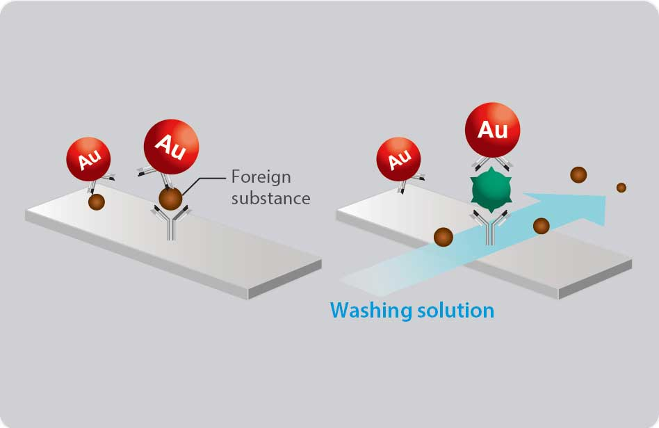 [image] Gold particles inside being washed by washing solution AG Test cartridge and clearing away foreign substances