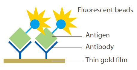 [image] Antigens connected to antibodies on top of thin gold film and fluorescent beads on antigens glowing yellow