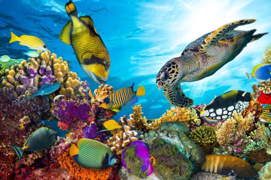 Sea life swimming under the ocean