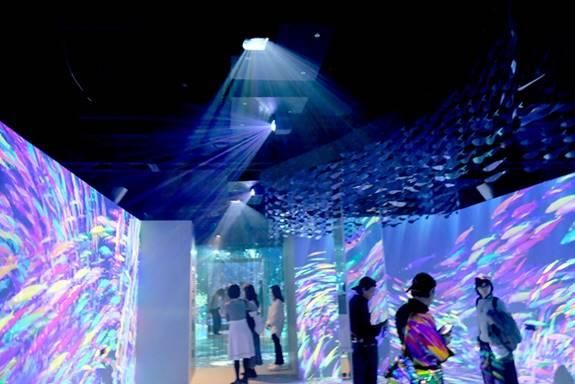 [foto] Pequeños grupos de visitantes parados en una habitación con luz atenuada, mientras que los proyectores aéreos proyectan coloridas agrupaciones de peces en paredes blancas en blanco.