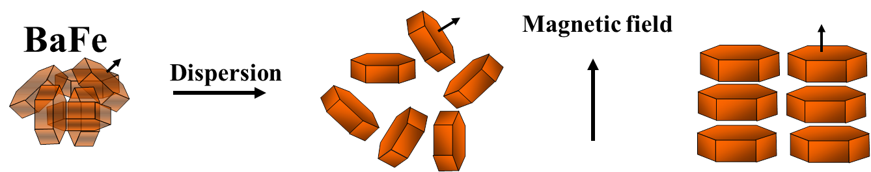 BaFe-Partikelausrichtung