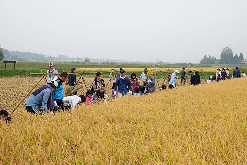 [画像]従業員と家族で稲刈りにも取り組んでいます