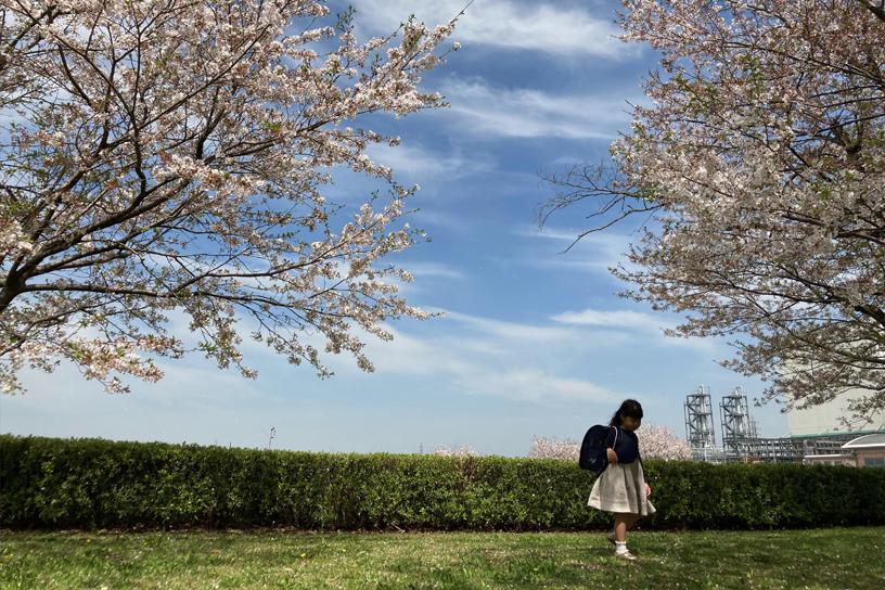 [画像]満開の桜の下で記念撮影する新一年生