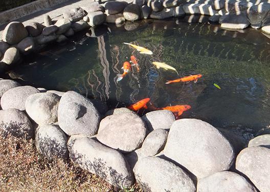 [写真]観察池