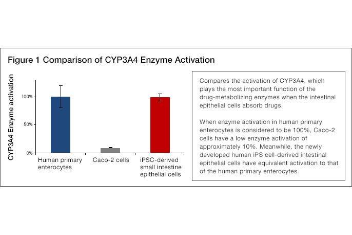 [Figure1] Comparison of CYP3A4 Enzyme Activation