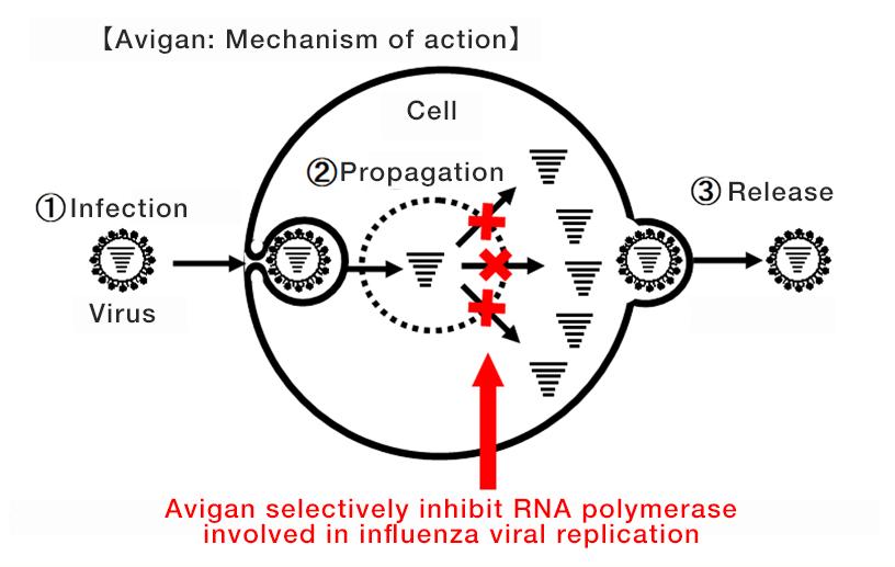 [image]Avigan: Mechanism of action