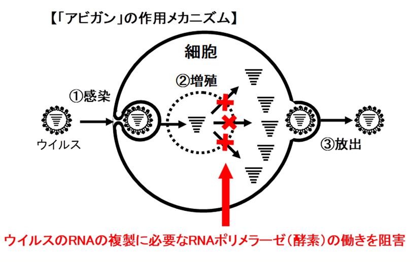 [図]「アビガン」の作用のメカニズム