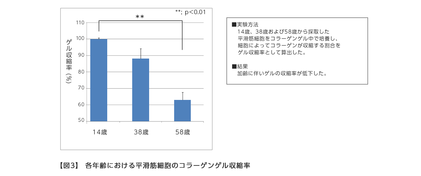【図3】 各年齢における平滑筋細胞のコラーゲンゲル収縮率
