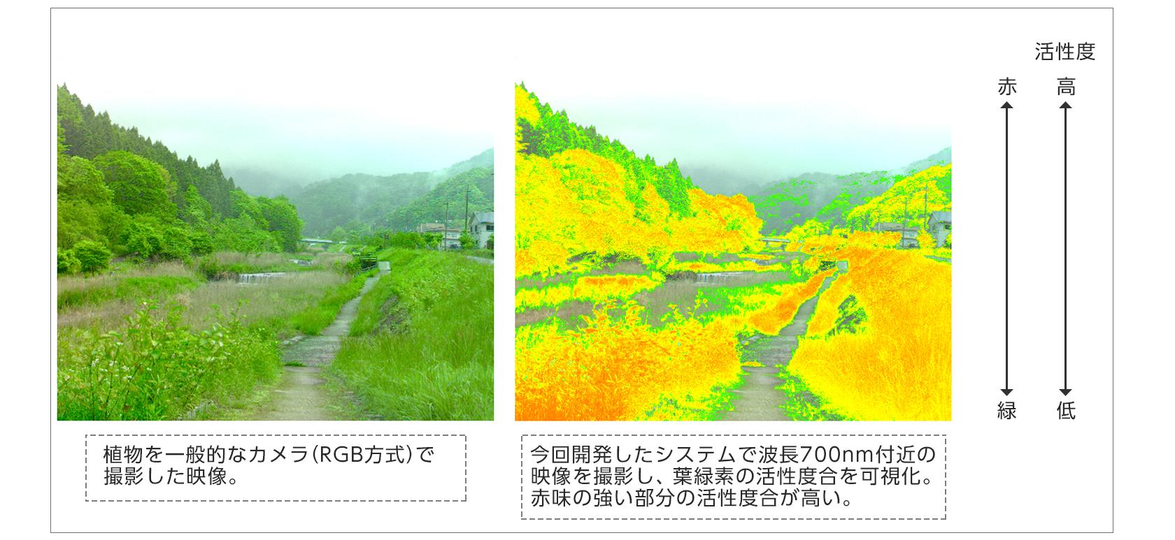 [図]【今回開発したマルチスペクトルカメラシステムの活用事例】①植物の生育観察