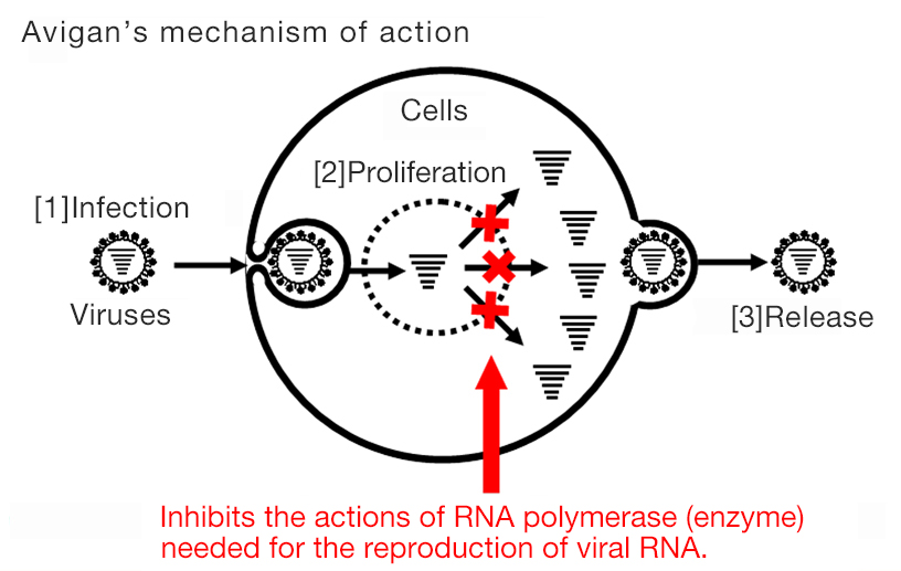 [Image]Avigan's mechanism of action