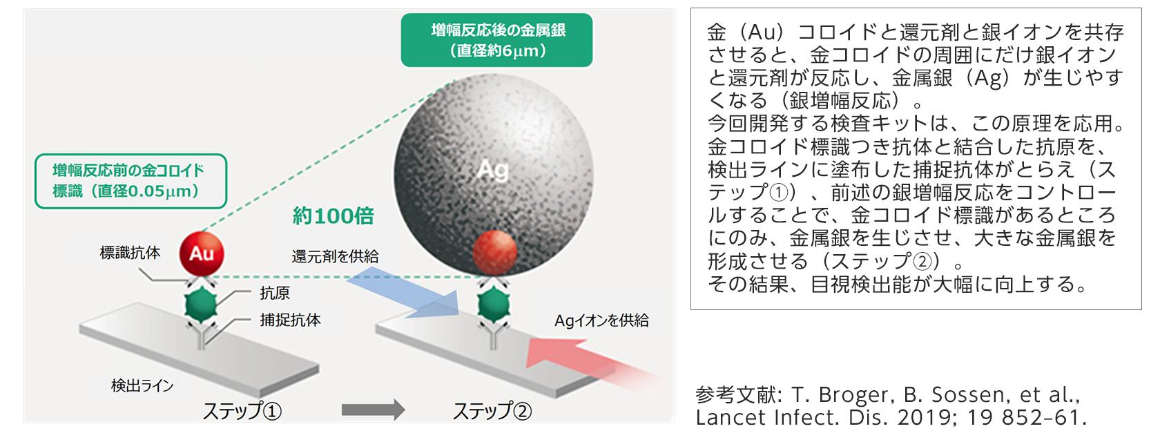 [図]今回開発する抗原検査キットに応用する銀増幅技術