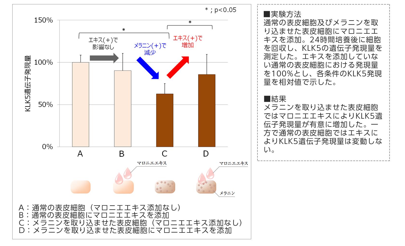 【図6】マロニエエキスのKLK5発現促進作用