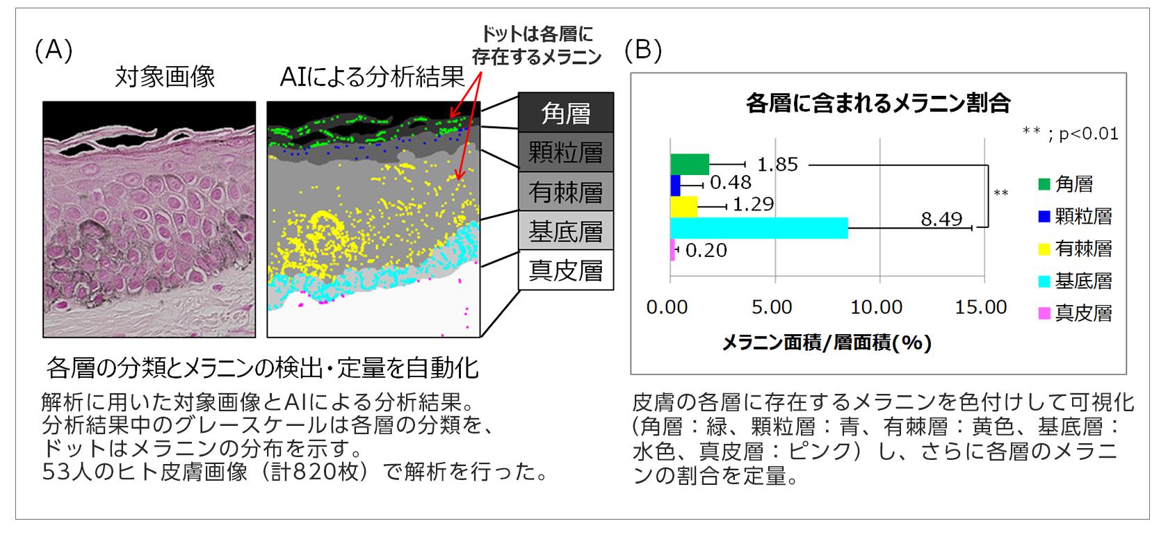 【図2】AIを活用した画像認識技術を応用した皮膚のメラニン分布解析