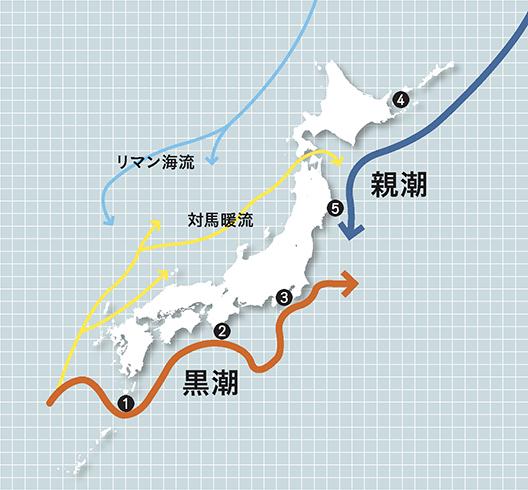 黒潮と親潮・5つの海域 イメージ図