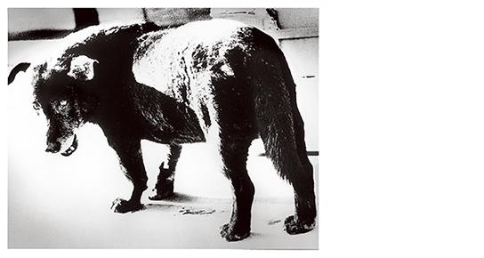 [写真]森山大道「三沢の犬」 1971年