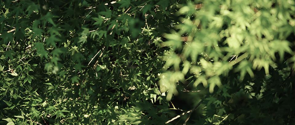 [사진] 초점에서 벗어난 전경의 나뭇잎과 초점이 맞은 배경의 나뭇잎 모습