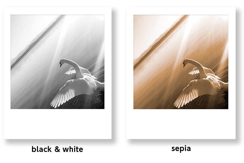 [photo] 흑백 및 세피아 필터가 적용된 동일한 사진 2장