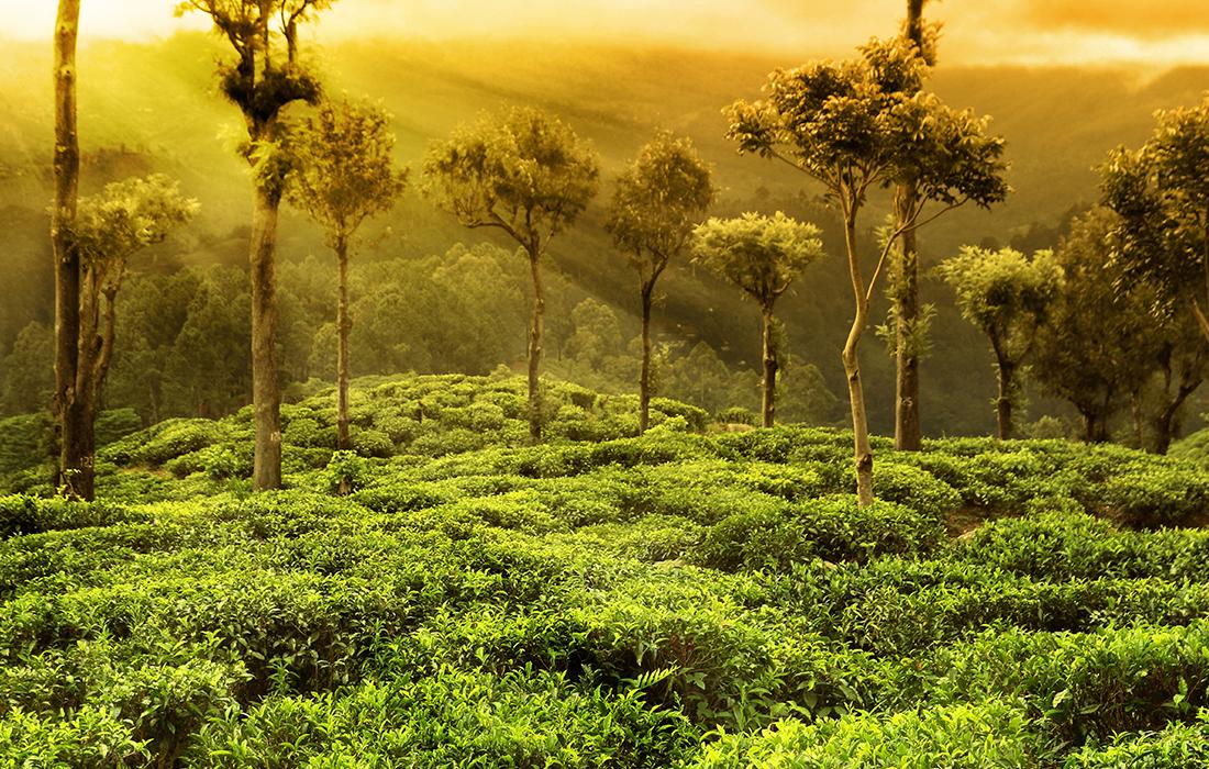 [photo] 울창하고 푸른 숲속 초목에 해가 떠오르거나 햇볕을 쬐는 모습