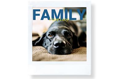 [photo] 카펫 위에 누워 있는 강아지의 앞모습과 상단의 FAMILY 텍스트