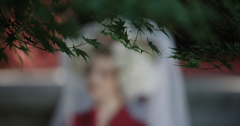 [photo] Close up of green tree leaves in focus with a blurry background