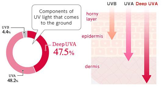 [image] Wykres przedstawiający światło UV docierające do ziemi w formie promieni słonecznych – 47,5% to głębokie promieniowanie UVA, a głębokie UVA przenika do najgłębszych warstw skóry – skóry właściwej