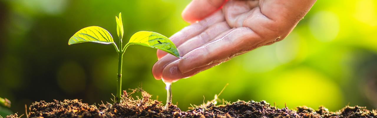 [zdjęcie] Zrównoważony rozwój