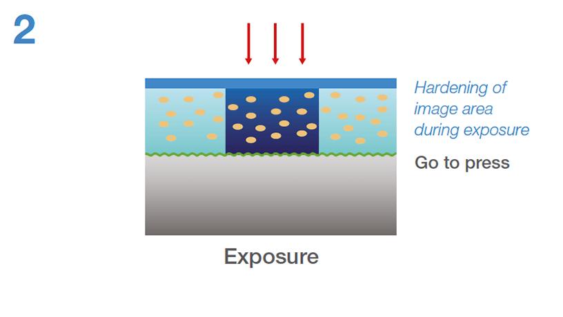 [imagen] Endurecimiento del área de la imagen durante la exposición