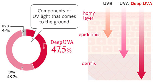 [image] Graph of UV light that reaches ground from sun - 47.5% is Deep UVA light, and Deep UVA penetrating through to deepest part of skin layers - the dermis