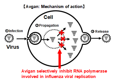 Illustration of Avigan Mechanism of Action