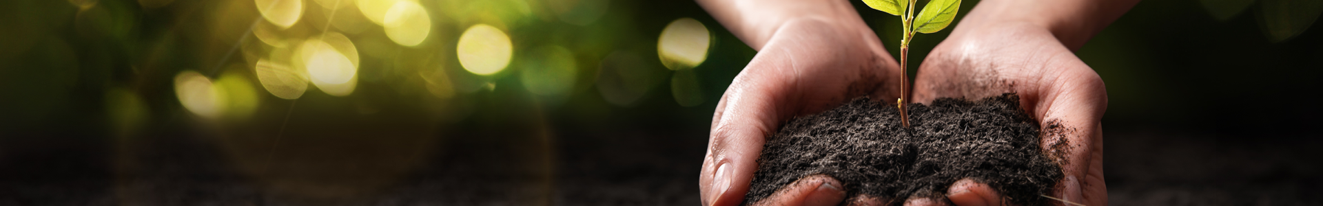 hands holding soil and small tree