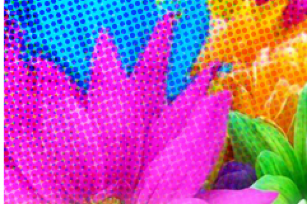 [image] Close up of a bouquet of multi-colored flowers
