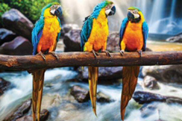 Semi Gloss example of parrots