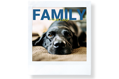 [photo] Front view of a dog lying on the carpet and the text FAMILY at the top of the photo